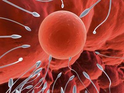 Sau khi quan hệ bao lâu thì tinh trùng gặp trứng?